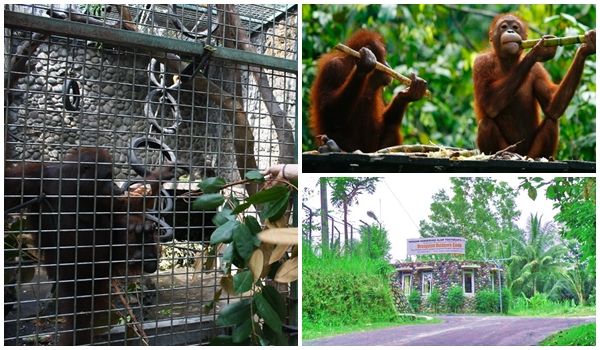 View Wildlife Rescue Center (WRC)