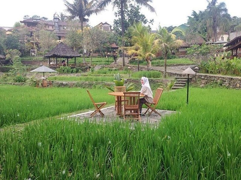 paddy-city-resort